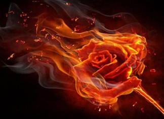 Роза Парацельса